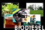 ליבריה תפיק חשמל מעצי הגומי